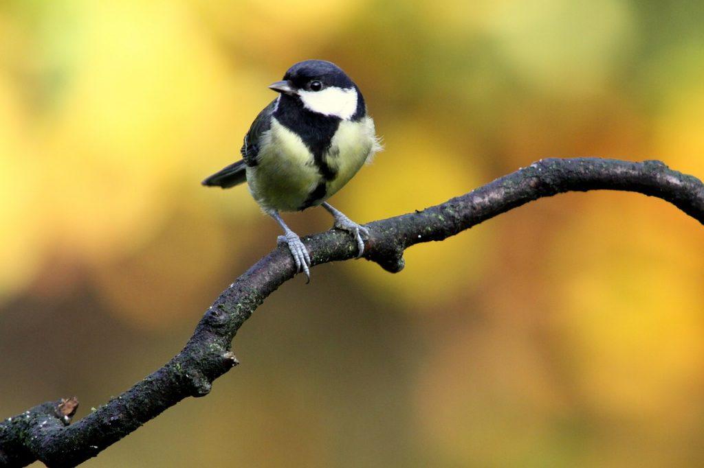 Vogels Nederland Tuin : Ijsvogel gezien ijsvogels